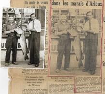 """Ancienne Photo + Article  : Janvier KEIGNART à Droite...,""""Brochet Pris à Arleux 29 Livres 1m29 Long.""""( 11,5 X 8,3 Cm ) - Arleux"""