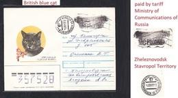 1993 .RUSSIA . Cat.Zheleznovodsk .Stavropol Territory. - Gatos Domésticos