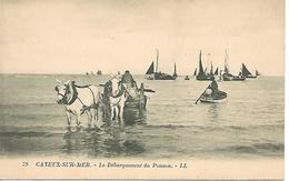 12/16     80     Cayeux Sur Mer      Le Débarquement Du Poisson   (animations) - Cayeux Sur Mer