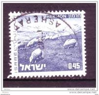 Israël, Mouton, Lamb - Ferme
