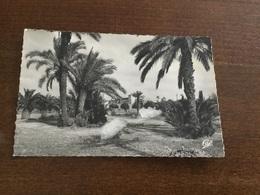 Marrakech Vue De L'hotel Mamounia - Autres