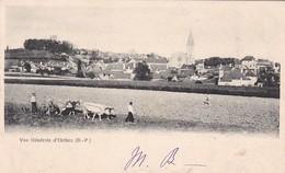 64 / ORTHEZ / VUE GENERALE / ATTELAGE BOEUFS AU LABOUR /  PRECURSEUR 1903 - Orthez
