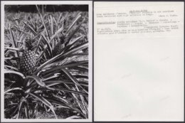 "CONGO BELGE PHOTOS J.COSTA (24X18 Cm) 1946 ""JARDIN BOTANIQUE ""LADIMBA (7G) DC-5220 - Afrique"