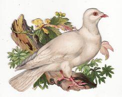 Chromo Découpi   Oiseau Sur Une Branche     GRAND FORMAT     14.5 X 12.2 Cm - Other