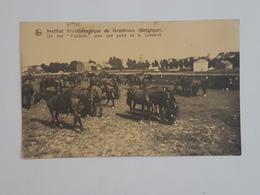 42071 -     Institut  Sérothérapique  De  Gembloux - Un Des  Paddock  Avec  Une Partie De La Cavalerie - Gembloux