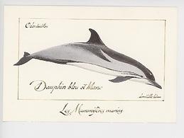 Domitille Heron Illustrateur : Dauphin Bleu Et Blanc, Odontocètes, Mammifères Marins (cp Vierge) - Dolfijnen