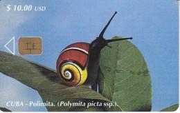 109 TARJETA DE CUBA DE UNA POLIMITA (CARACOL-SNAIL-ESCARGOT) - Cuba