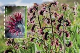 Azerbaijan Stamps 2019 The Nature Of Nakhchivan. Flowers Solenanthus Circinnatus - Azerbeidzjan