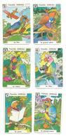 Famille OISEAU, 6 Cartes Illustrées (images, Dessin, Humour, Perroquets, Humanisés) - Parrot - Autres Collections
