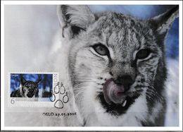 Norvège. Norway..Lynx; Bobcat  Carte Maximum - Felinos