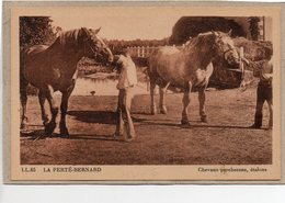 72 - LA FERTE BERNARD - CHEVAUX PERCHERONS, ETALONS - ANIMEE - TRES BEL ETAT - La Ferte Bernard