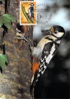 LUXEMBOURG  CARTE PHILATELIQUE   NUM-YVERT  595 FAUNE OISEAUX  PIC EPEICHE  PROTECTION DE LA NATURE - Cartes Maximum
