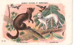 Nathan  Animaux Sauvages Et Domestiques  N°  61   Martre Et Hermine - Vieux Papiers