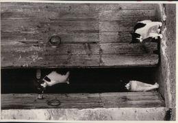 520  CHAT     NON  ECRITE - Cats