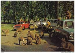 Carte Postale  Angleterre Woburn  Le Zoo Trés Beau Plan - Angleterre