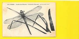 Libellule D'Europe (Aeschna Grandis) Jardin Des Plantes Paris - Insectos