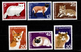 BULGARIE - 1967 - Chats - YT N° 1505 / 1510 - ** - Le 1509 Legèrement Abimé - Série Complète - Katten