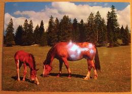 Schweiz-Suisse 1969:Bild-PK CPI MARCHÉ-CONCOURS SAIGNELÉGIER Zu WII145 Mi 905 Yv 837 BUREAU POSTE AUTOMOBILE 10.VIII.6 - Hippisme