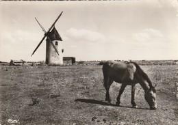 NOIRMOUTIER. - BARBATRE. Cheval Broutant Devant Le Moulin . CPM  Dentelée - Noirmoutier