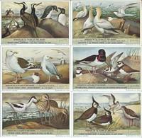 Chromos LIEBIG Série Complète N°: 1610 Oiseaux - Liebig
