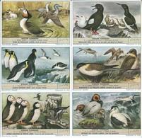 Chromos LIEBIG Série Complète N°: 1634 Oiseaux Plongeurs - Liebig