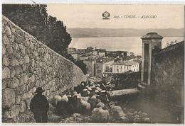 CORSE CPA  AJACCIO - Berger Et Son Troupeau - Ajaccio