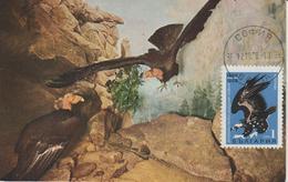 Bulgarie Carte Maximum Oiseaux 1968 Vautour 1602 - Bulgarien