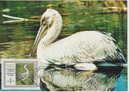 Bulgarie Carte Maximum Oiseaux 1968 Pélican 1627 - Bulgarije