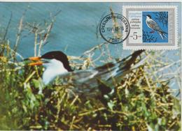Bulgarie Carte Maximum Oiseaux 1968 Sterne 1630 - Bulgarije