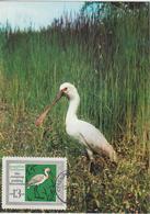 Bulgarie Carte Maximum Oiseaux 1968 Spatule 1631 - Bulgarien