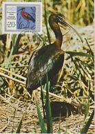 Bulgarie Carte Maximum Oiseaux 1968 Ibis 1632 - Bulgarije