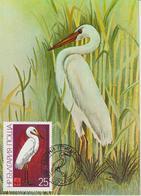 Bulgarie Carte Maximum Oiseaux 1981 Casmerodius 2620 - Cartas
