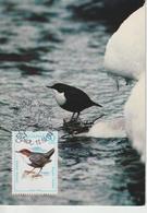 Bulgarie Carte Maximum Oiseaux 1987 Cinclus 3130 - Cartas