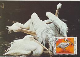 Bulgarie Carte Maximum Oiseaux 1988 Pélican 3171 - Cartas