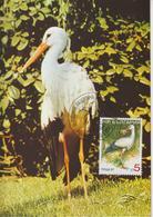 Bulgarie Carte Maximum Oiseaux 1988 Cigogne 3223 - Cartas