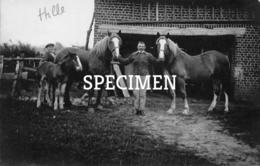 Fotokaart Boerderij - Paarden -  Hille -  Zwevezele - Wingene