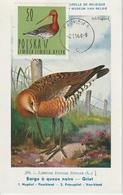 Pologne Carte Maximum Oiseaux 1964 Barge 1349 - Cartoline Maximum