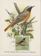 Pologne Carte Maximum Oiseaux 1966 Rouge-queue 1573 - Maximumkarten