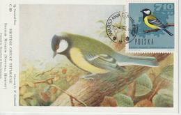 Pologne Carte Maximum Oiseaux 1966 Mésange 1577 - Maximumkarten