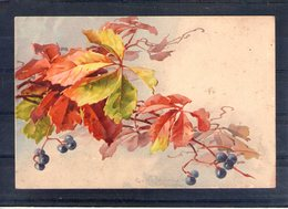 Carte Illustrée. Vigne Et Raisin - Botanik