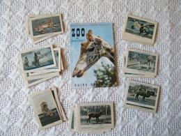 Ensemble D'images Du Zoo De Vincennes Avec Livret . - Vieux Papiers