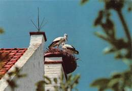 Knokke Zoute La Reserve Ornithologique Du Zwin Vogelreservaat Het Zwin Ooievaar Cigogne White Stork    Barry 3852 - Oiseaux