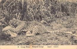 Belgisch Congo Belge  Leopard  Panter Luipaard Jachtluipaard    Barry 3854 - Congo Belga - Otros