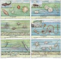 Chromos LIEBIG Série Complète N°: 1674 Le Plancton - Liebig