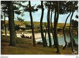 MOELAN SUR MER   KERFANY  La Plage Vue à Travers Les Pins. - Moëlan-sur-Mer