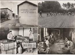 4 CPSM:BURGY (71) PÉPINIÈRES LETOURNEAU OUVRIER ATELIERS GREFFAGE,PLANTATION PINOT NOIR ET MEUNIER,PARAFFINAGE - Francia