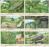 Chromos LIEBIG Série Complète N°: 1695 Les Araignées - Liebig
