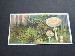 Chromo ( 339 )  Sans Publicité    Zonder Reclame -  Champignons  Champignon  Paddestoelen  Paddestoel - Non Classés