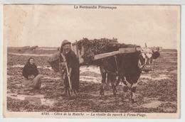 50 - Pirou - Côtes De La Manche - La Récolte Du Varech à Pirou-Plage - Otros Municipios