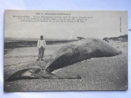 CPA (17) Charente Maritime - Grande Côte - Baleine échouée Sur La Côte De L'Ile D'Oléron - 1909 - Ile D'Oléron
